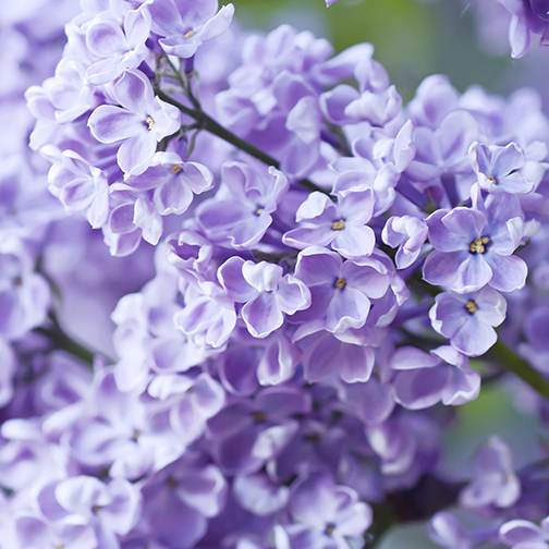 Fine Florals